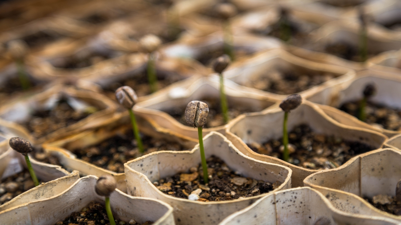 The Principle of Sowing and Reaping